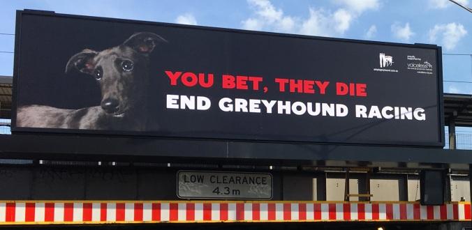 greyhoundbillboard